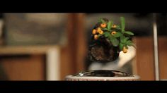 These floating bonsai trees are a moment of sci-fi zen