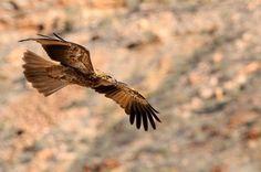 Falcon, Northern Territory, Australia - Photogrpaghy: Basil Bilanenko