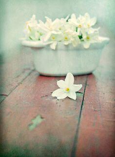 spring by Frau-Bella....white flowers!!!...romance....