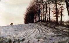 Rien Poortvliet is my favorite ilustrator. Do you not feel what temperature and what kind of weather it is in this painting. Nature Paintings, Landscape Paintings, Deer Paintings, Dutch Artists, Winter Trees, Wildlife Art, Watercolor Landscape, Painting & Drawing, Illustrators