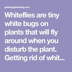 how to get rid of whiteflies on tomato plants