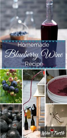 Looking for a good homemade Blueberry Wine recipe? Look no more! Follow this easy step-by-step guide from Wine Turtle to make your blueberry wine :)