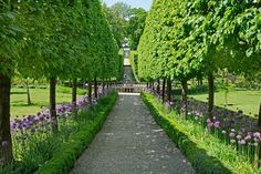 """A classic example of an allée planted with pleached (interlaced) hornbeam, a tree known for its ability to be trained into a tight mass, can be found at Buscot Park, an 18th-century estate in Oxfordshire, England, now overseen by the National Trust. Underplanted with allium that blooms from May through June and hedged in by tightly clipped boxwood, the allée leads to a lily pond with a fountain and on to another water feature, """"Faux Fall"""" by David Harber, which was added to the garden in ..."""