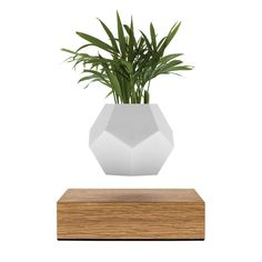 LYFE consists of a planter that hovers over an oak base via magnetic levitation. Designed to gently rotate during suspension.  The rotation especially benefits Air Plants, as nutrients are absorbed by their leaves throug