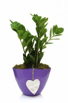 Best Indoor Plants, Gardening Tips, Flora, Planter Pots, Home And Garden, Beauty, Decoration, Plants, Decor