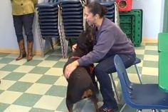 Woman's surprise reunion with her Rottweiler and best friend after 2 years (VIDEO) » DogHeirs | Where Dogs Are Family « Keywords: Rottweiler, Humane Society of Chittenden County