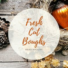 The scent of fresh cut boughs fragrance wafting through our homes.... With the recent cold snap there won't be any harvesting of anything but snow and ice. So its a good thing we prepared them ahead of time. . . . . . . http://ift.tt/2gP7wdk Visit www.ruralmag.com a free online magazine for #midlife women. It's not where you live it's how.