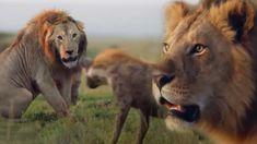 Un'ora di affascinanti comportamenti animali . Tiziano Caviglia Blog Natural History, Bbc, All About Time, Hilarious, Earth, In This Moment, Environment, Amazing, Youtube