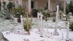 Protection des palmiers : Comment bien protéger vos palmiers en hiver ?
