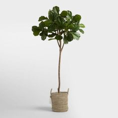 Lush and lifelike, our six-foot fiddle leaf fig tree has broad leaves, poseable branches and a sculptural silhouette that make a stylish statement in any space.