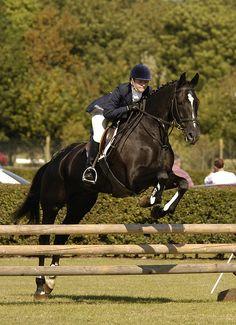 show-jumping-horse-0005.JPG | michael huggan photography