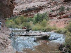Negro Bill Canyon, Moab, UT and my doggies