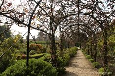 Loseley Park is a very special place and a delight to visit at any time of year. This year, The Loseley Park Spring Garden Show is on from Friday April 2016 to Sunday April Buy Plants, Large Plants, Garden Arbours, Great Places, Places To Visit, Smith Gardens, Unusual Plants, Garden Show, Spring Garden