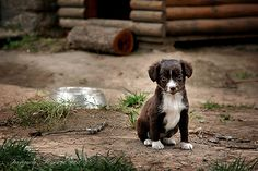 https://flic.kr/p/5zWh9F | Cute puppy. Tanjica Perovic Photography. | she has 6 brothers and sisters :)  explore #12 FP