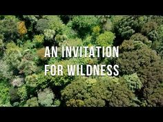 Exploring a beautiful, 23-year-old food forest in New Zealand (Video) : TreeHugger