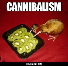Cannibalism#funny #lol #lolzonline