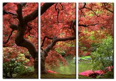 Framed Huge 3 Panel Maple Tree Giclee Canvas by ModernWallDeco, $99.00