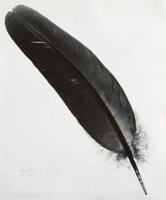 MAN RAY | Feather, 1940s | Gelatin silver print