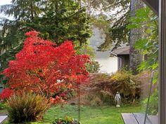 Back yard, Lakeheart Guesthouse Oregon Coast, Art Deco, Backyard, The Originals, City, Plants, Patio, Backyards, Cities