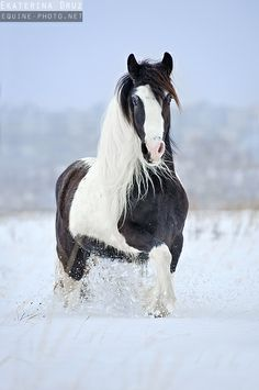 Photographs of draft horses of different breeds by Ekaterina Druz Equine Photography Horses In Snow, Cute Horses, Pretty Horses, Horse Love, Wild Horses, Most Beautiful Animals, Beautiful Horses, Anglo Arabe, Animals And Pets