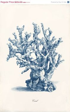 Blue Coral Art Print 11 x 17 Inch Coral D by 1001treasures, $20.00
