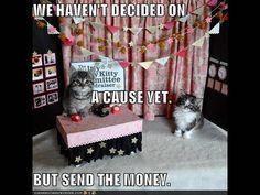 kitties without tuna foundation... supplying poor kitties with tuna since 1999 lol
