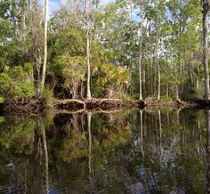 Intriguing Reflections.... Along a peaceful tributary creek of the Suwannee River.