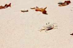 #crabs #crab #whitesandbeaches #marinelife #seychelles #indianocean