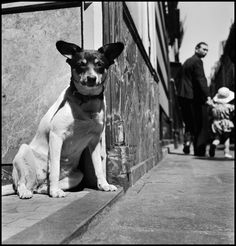 There is bound to be something special just around the corner. Elliott Erwitt // FRANCE. Paris. 1949.