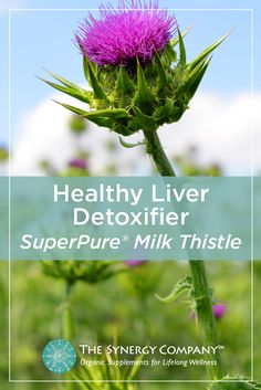 Shop the number one researched milk thistle extract for optimal liver health and healthy detoxification. Our certified organic, SuperPure® extract process safely and completely captures the whole spectrum of this special seed's most valuable compounds. With the perfect ratio and spectrum of all of milk thistle's highly protective compounds, you will experience the maximum benefit from this time-honored herb.