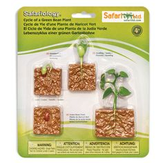 This is a Life Cycle of a Green Bean figure set that is made by Safari Ltd. Safari is one the most well known companies that produced accurate and highly detailed figures that are related to the life