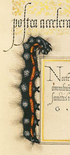 Dagger (detail), Joris Hoefnagel, Georg Bocskay, 1591-96, script 1561-62