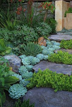 Succulant Garden eclectic - I like this as a strategy to the landscape. Use harmonious colors, and create something full, with color and texture. think of working with green as the dominant color then use blue as the accent.