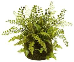 Mixed Fern with Twig and Moss Basket contemporary-artificial-flowers-plants-and-trees
