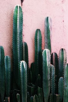 Papaya and seaglass cacti.