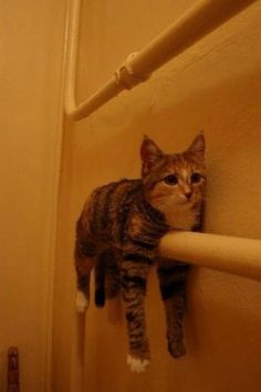 Straddling the towel rack. | 49 Places You Don't Want To Find YourCat
