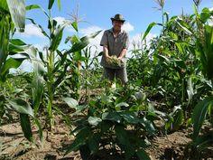 O Refis Rural é pago pelos empregadores para ajudar no custeio da aposentadoria dos trabalhadores.