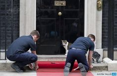 Larry the Downing Street cat watches as workmen install a red carpet for Vladmir Putin