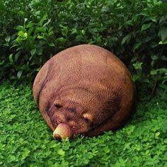 Naturally Plush: Beanbag Bear