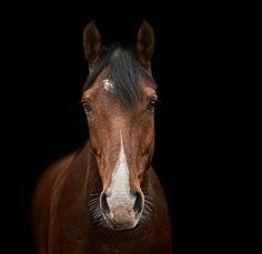 hampton hostess: YEAR OF THE HORSE