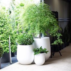 The Balcony Garden o Balcony Plants, Balcony Garden, Garden Pots, Indoor Plants, Pot Plants, Outdoor Trees, Outdoor Planters, Potted Trees Patio, Organic Farming
