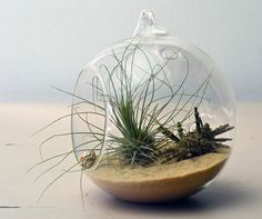 Beach Terrarium - I have a hanging globe with a broken hangy-part... this would be perfect!