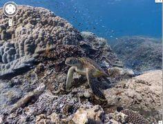 Street View si tuffa nell'oceano: Barriere coralline, mante e tartarughe