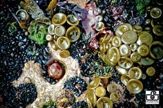 Seaweed harvesting site Mermaid Parade, Ernst Haeckel, Seaweed, Ireland, Shells, Surfing, Marvel, Mood, Stone