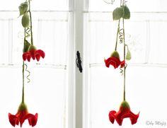 Filzblüte, rot, doppelte Blüte mit Blättergirlande von Mafiz auf DaWanda.com