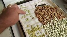 Soaking seeds to kickstart germination. Permaculture, Gardening, Make It Yourself, Projects, Project Ideas, Plants, Saving Seeds, Propagation, Towel