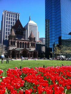Boston's Photo of the day. Tulips in Boston. Beautiful. #bostonusa