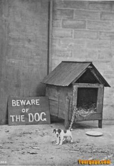 Beware of Dog! Too Cute I Love Dogs, Puppy Love, Cute Dogs, Cutest Puppy, Les Innocents, Funny Animals, Cute Animals, Beware Of Dog, Vintage Dog