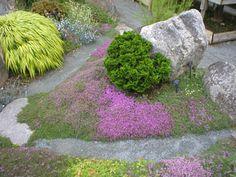Planting Flowers, Flowering Plants, Garden Beds, Lawn, Grass, Flora, Bed Ideas, Nova Scotia, Phoenix