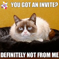 Grumpy Cat- posted by Candice Marie Grumpy Cat Meme, Grumpy Cat Quotes, Cat Memes, Grumpy Kitty, Funny Animal Memes, Funny Animal Pictures, Funny Cats, Funny Animals, Animal Funnies